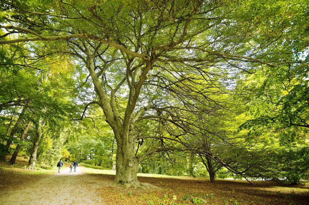 Arnold Arboretum - Boston
