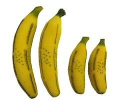 multiplying bananas sponge