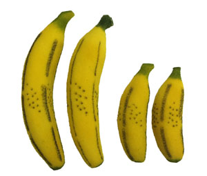 multiplying bananas sponge