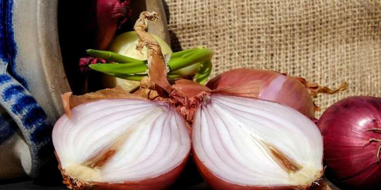 Do You Know The Health Benefits Of Onions And Its Side Effects?