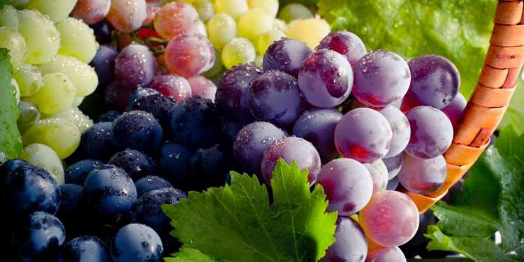 How Did Grapes Reach India Its Types & Health Benefits
