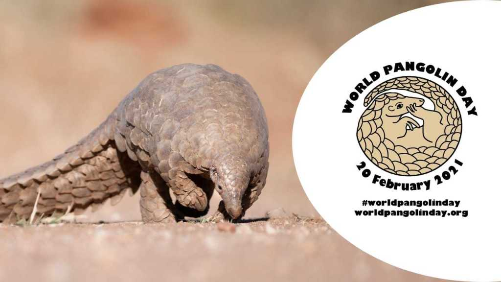 February 20 - World Pangolin Day