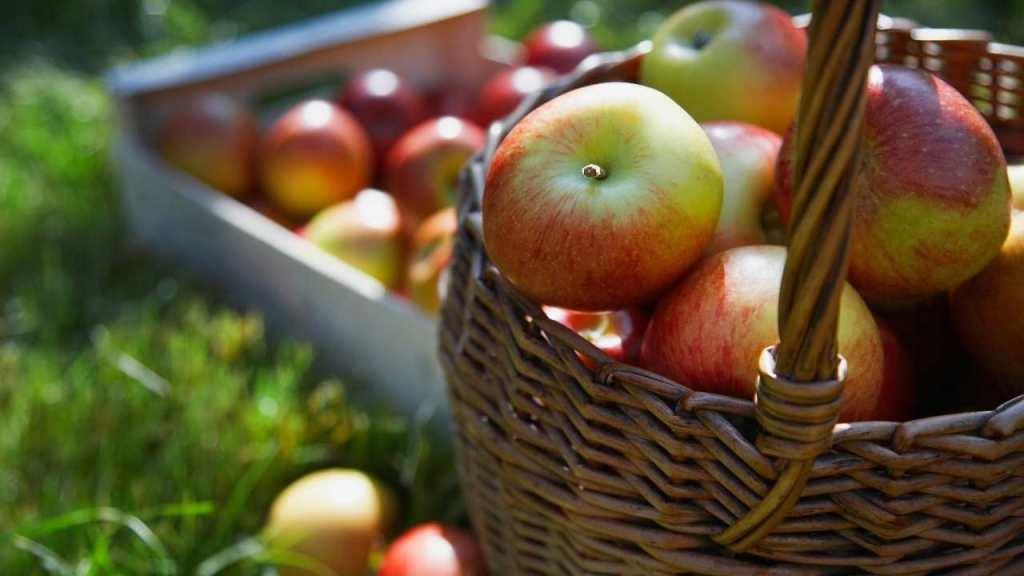 Apples for kidney cleaning