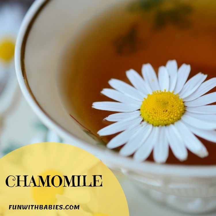 Chamomile - Top Foods that will increase your breastmilk supply