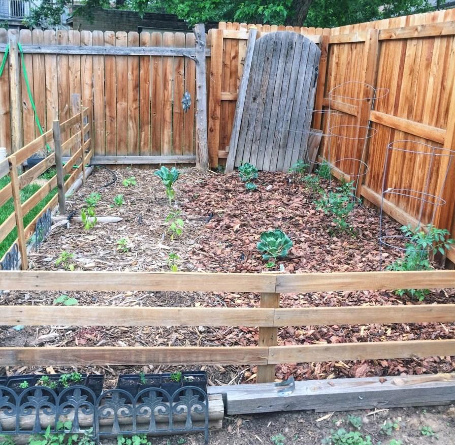 garden, complete!