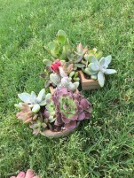 "Letter ""S"" planter filled with succulents! - funyumandfrills.com"