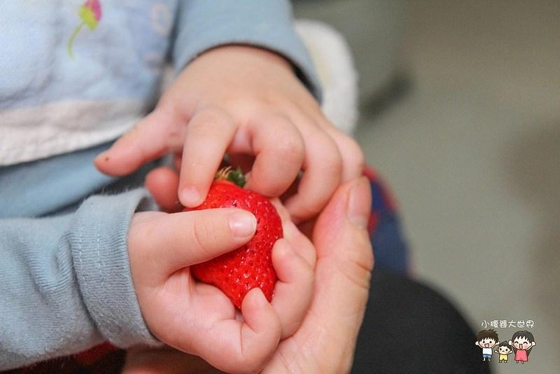 彰化草莓 014