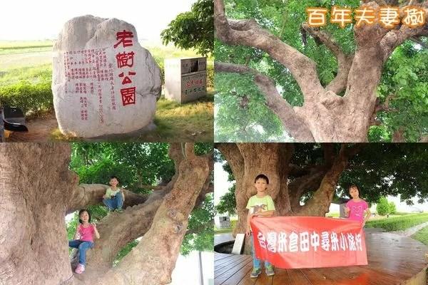 百年夫妻樹.jpg