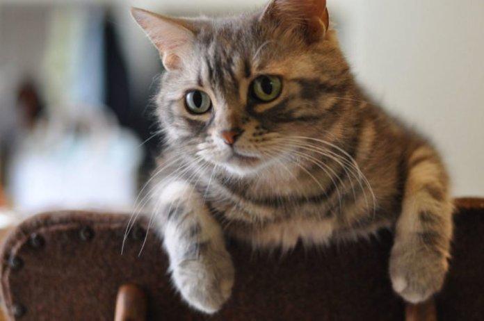 12 e1550832580987 - C'est la Neko no hi, ou journée des chats, et voici pourquoi !