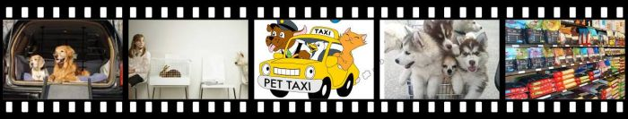 Pet Taxi and Delivery Services
