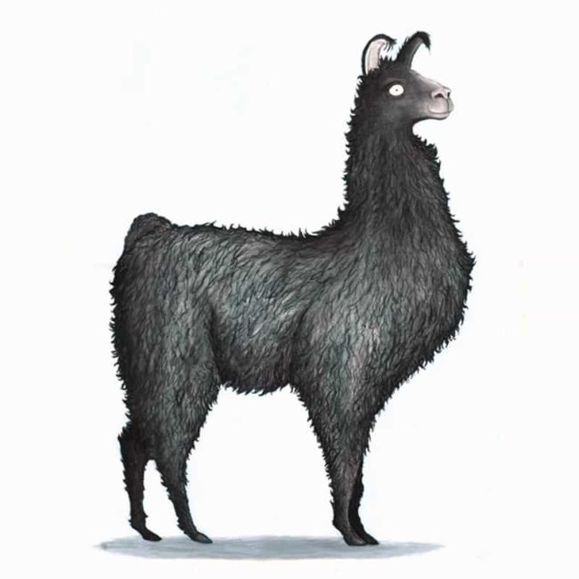Black Llama Fur Feathers And Tails