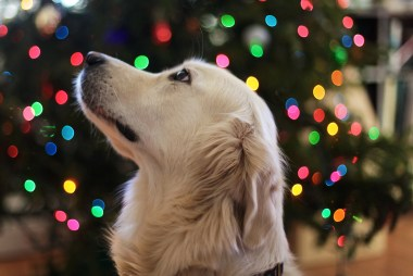 Dog Christmas Gift Ideas   Ultimate Gift Guide for Dogs
