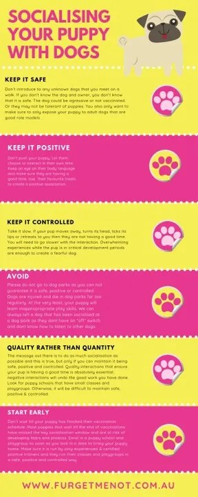 Socialising your puppy