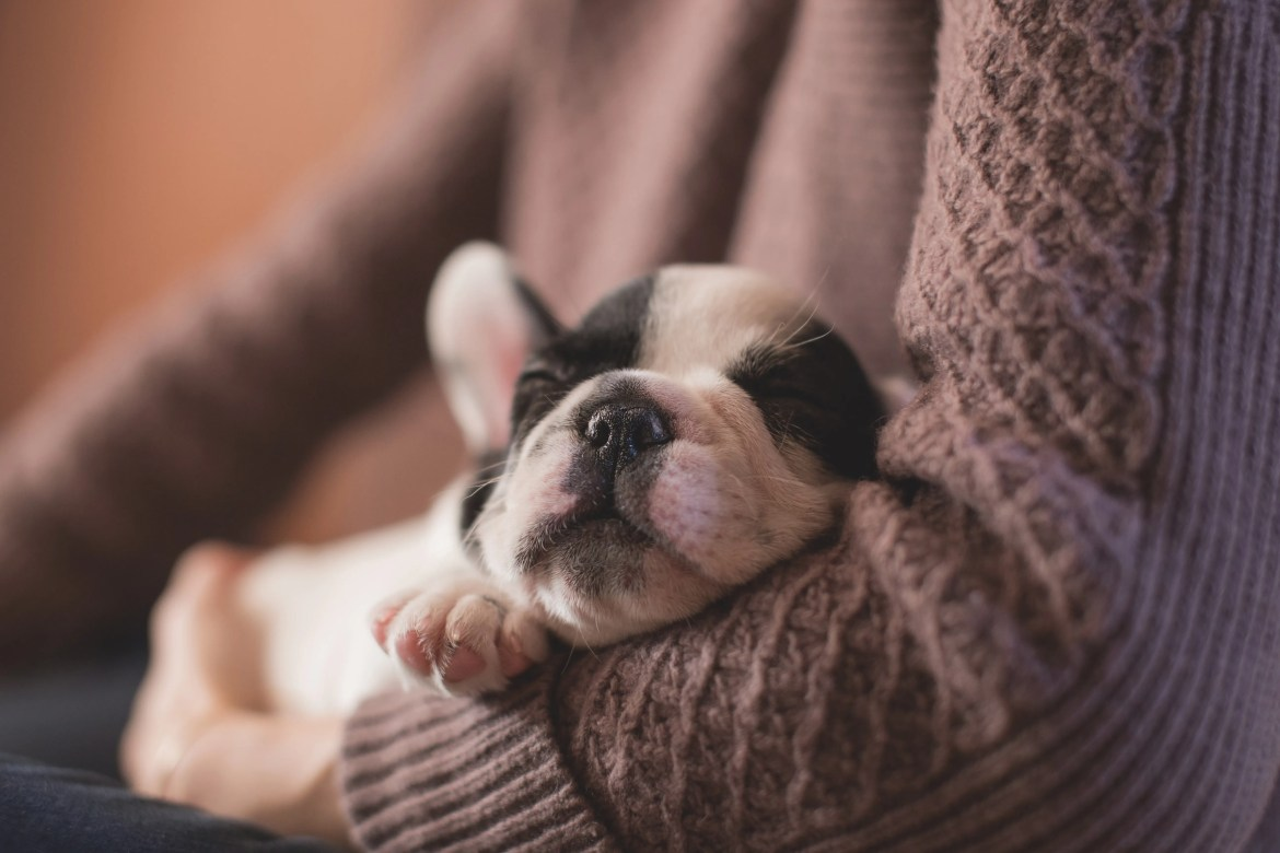 New Puppy Checklist | 7 Things To Do Before Your Puppy Comes Home