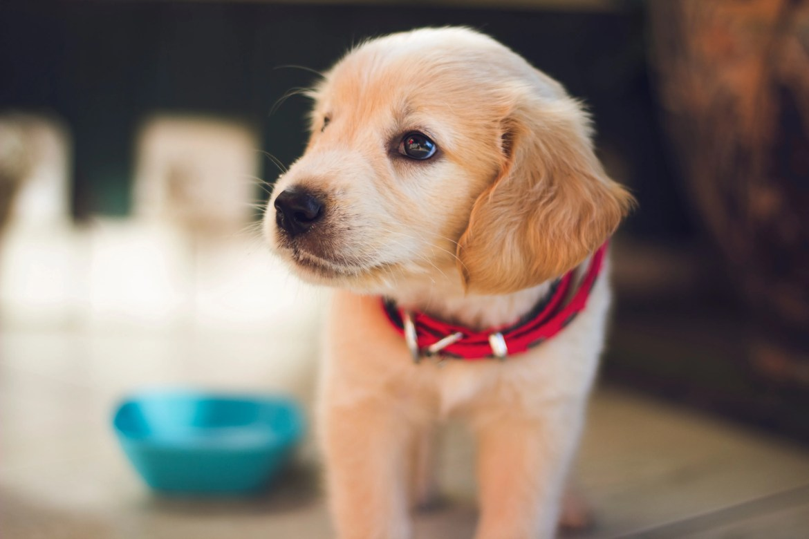 Puppy's First Night | How To Prepare, What To Expect