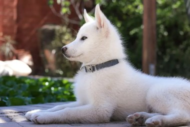 puppy collar | Puppy school