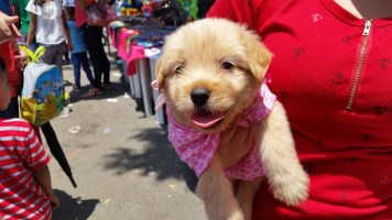 this dog didn't need much help to be adorable
