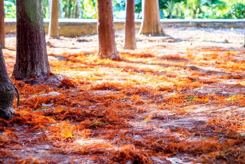 地上鋪滿了落葉,也變得很美麗。