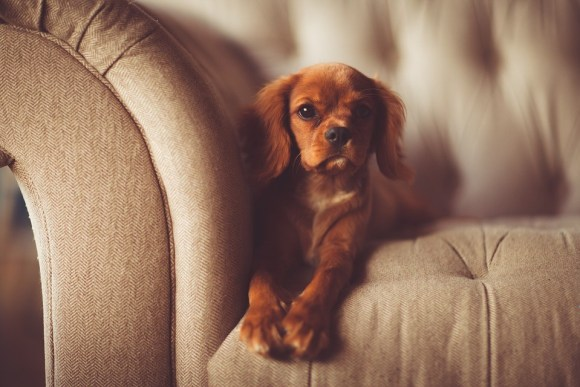 Best couch for dog owners