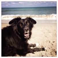 Happy dog at Jupiter Beach.
