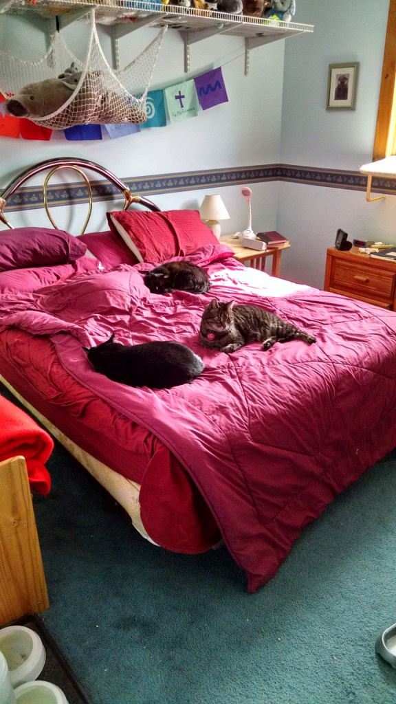 Cats onna bed