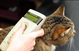 Cat with microchip from Smitten Kitten