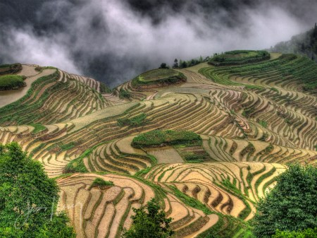 Longji Rice Terraces, China