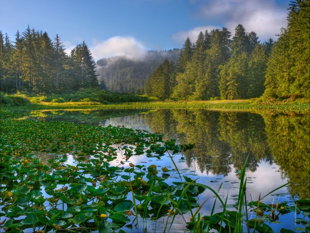 Pond on Redwood Creek, California