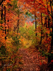 Lost Prospector Trail in Autumn; mountain autumn