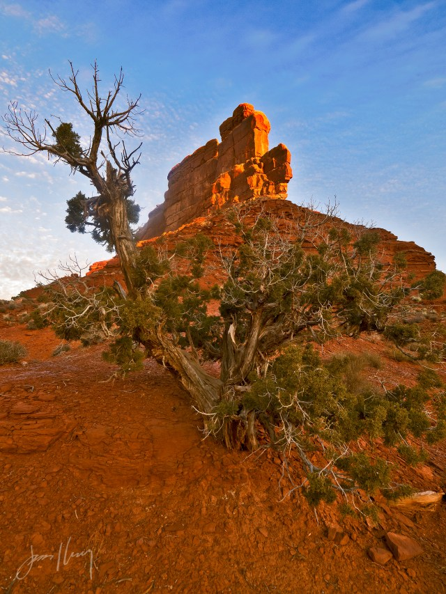 Tree of Life, Valley of the Gods