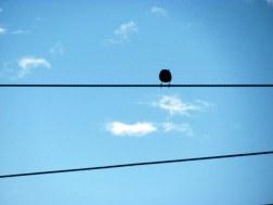 Pájaro en cuerdas 3