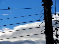 Pájaro en cuerdas 2