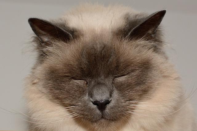 瞑想のやり方を7個紹介!簡単な呼吸法や効果的な4つのコツとは?