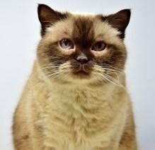 正面を見つめる猫
