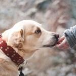 動物に話しかけ、会話をすると癒し、ストレス解消、4つのセラピー効果?!