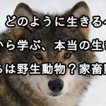 動物から学ぶ「生きる目的」とは。私たちは野生の動物?家畜動物?
