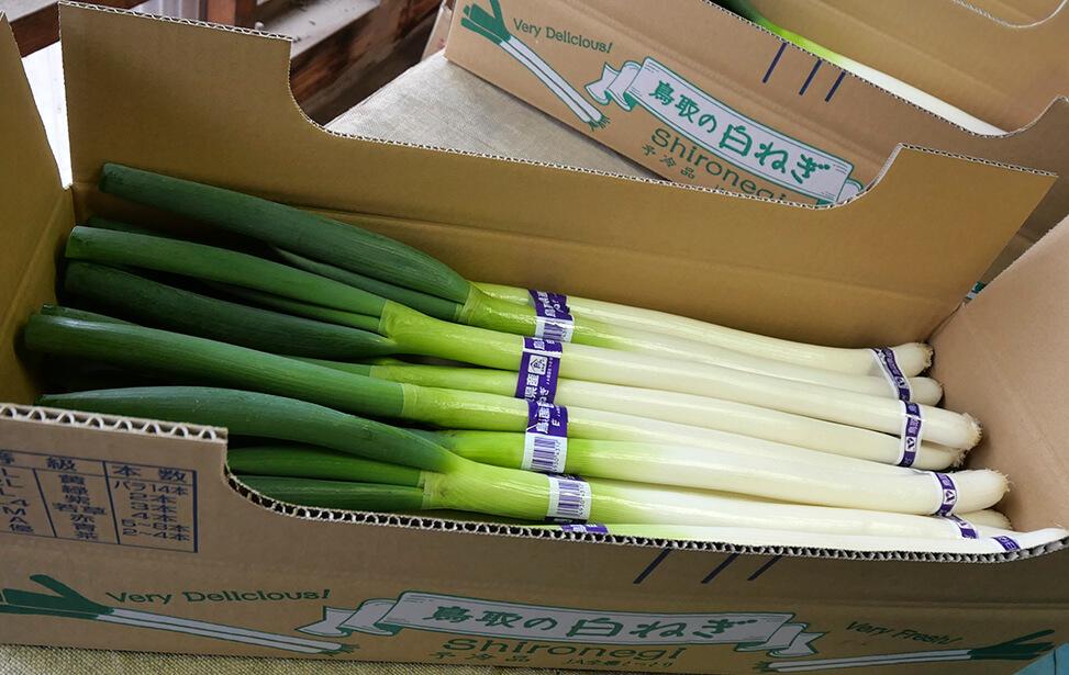 やわらかくて甘い鳥取県産白ねぎ(3kg)