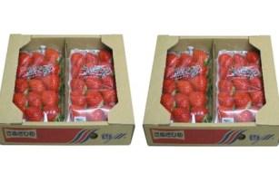 香川県オリジナル品種!さぬきひめ苺 1.1kg※クレジット決済のみ