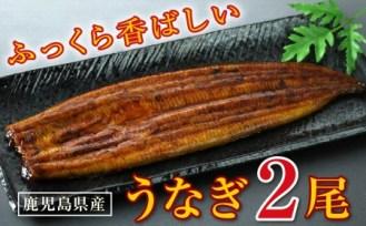 鹿児島産 特上うなぎ2尾!