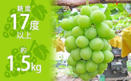 約1.5kg シャインマスカット 讃岐育ちのフルーツ ・ぶどう 旬 高級  イメージ