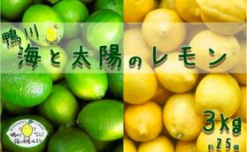 【先行予約】海と太陽のレモン 3kg(約25個)