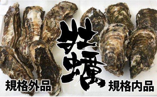 〔訳あり規格外品〕三陸広田湾の殻付きかき 20個 イメージ