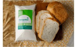 北海道十勝 前田農産パン用小麦粉「春よ恋」5㎏