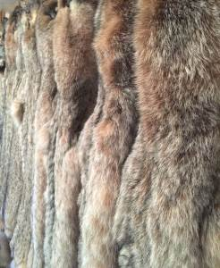 Select Wild Fur Tanned Pelts