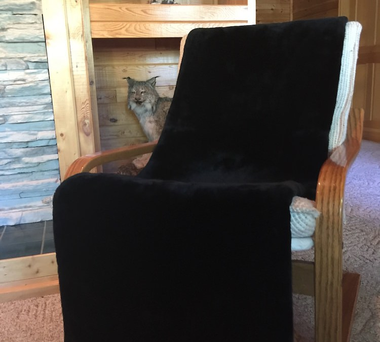 Real Sheared Beaver Fur Throws & Blankets