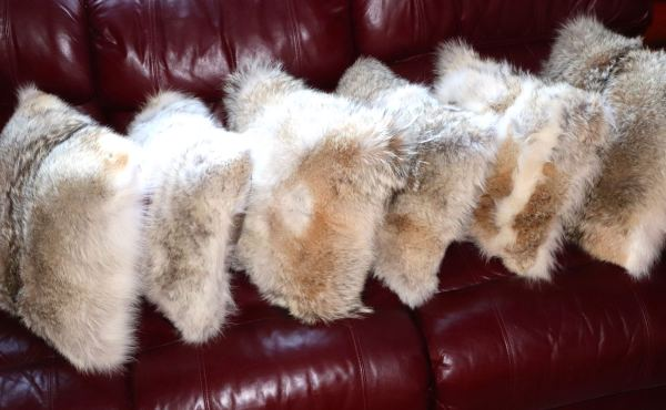 Beautiful Coyote Fur Pillows