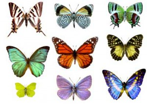 where do butterflies get their colors discovery kids