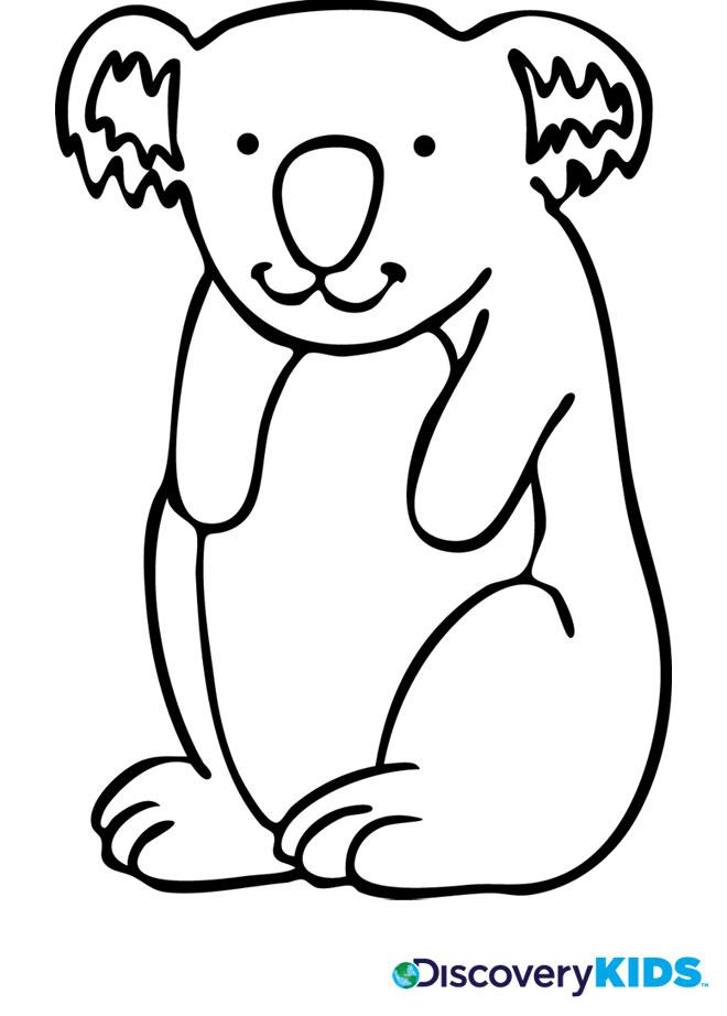 koala bear coloring page discovery kids