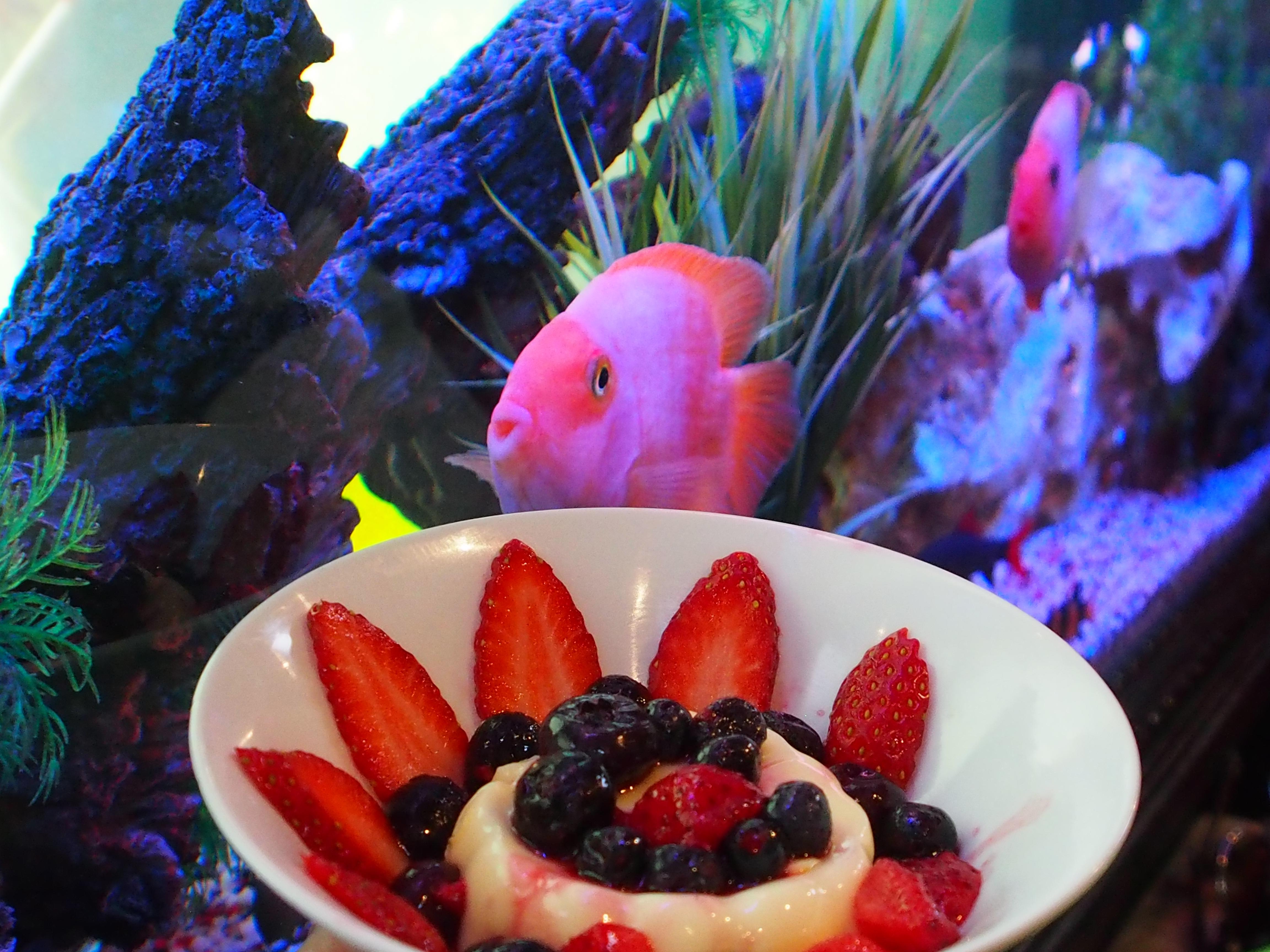 randburg restaurant fusionista asian - desserts