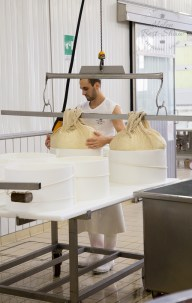 Fitting fresh Grana Padano PDO into the traditional moulds